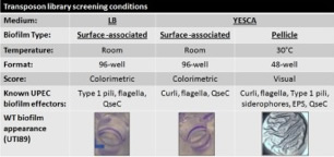 biofilms under different conditions